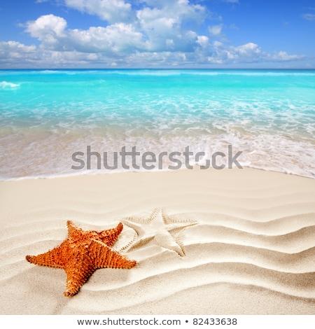 Stockfoto: Strand · zeester · print · shell · witte · caribbean