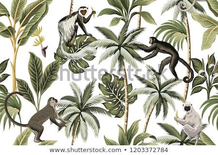 Обезьяны джунгли иллюстрация лес закат Cartoon Сток-фото © adrenalina