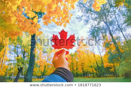 Family with yellow maple leaves in wood in autumn