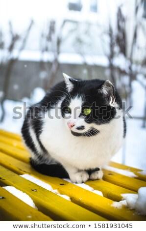 beyaz · kedi · sunmak · kırmızı · kutu · bebek - stok fotoğraf © dashapetrenko