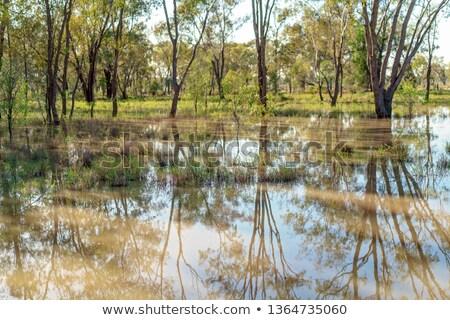 Moeras bomen water blad meer plant Stockfoto © njnightsky
