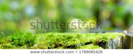 Yosun bulanıklık yeşil taze doğa bahar Stok fotoğraf © sweetcrisis