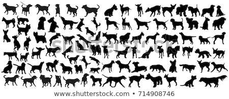 dogs silhouettes set Stock photo © Kaludov