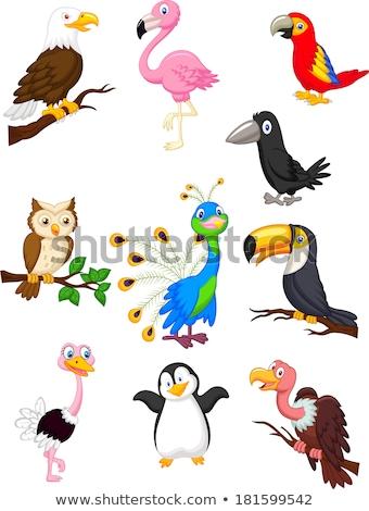 macaw bird cartoon stock photo © dagadu