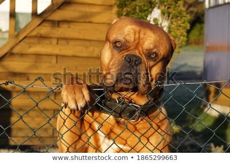бездомным черный коричневая собака желтый песок глядя Сток-фото © vkraskouski