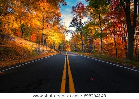 Vallen weg najaar kleurrijk trillend esdoorn Stockfoto © Pietus