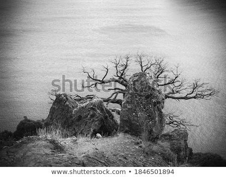 Tree in mountains, sea, sky. Ukraine. Southern coast of Crimea. Stock photo © acidgrey