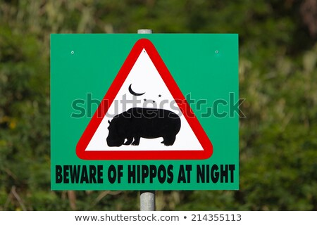 beware hippo Stock photo © tiero