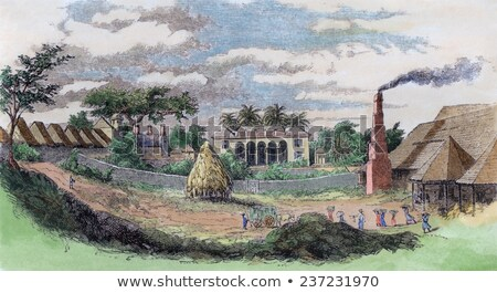 sugar cane plantation on cuba stock photo © haraldmuc