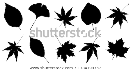 Japanese maple. Stock photo © beholdereye