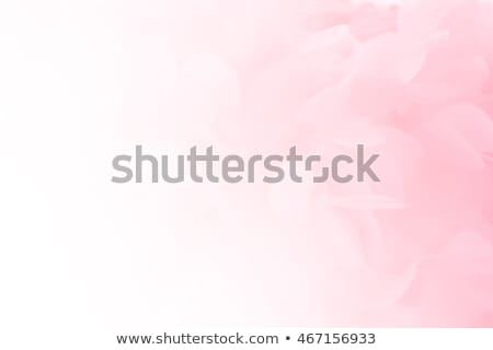 Pink Background And Florals stock photo © derocz
