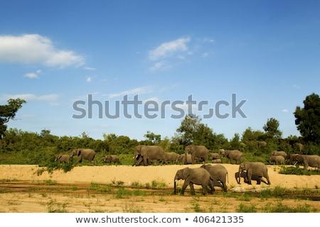 Stock fotó: Csoport · elefánt · park · három · elefántok · út