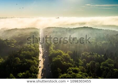 весны Литва Вильнюс 2014 цвести основной Сток-фото © vavlt