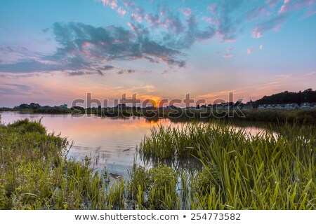 river forelands of the rhine in the netherlands stock photo © hofmeester