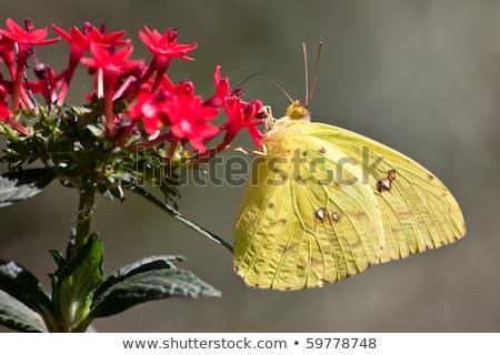 Sem nuvens colorido flores vermelho cor animal Foto stock © hlehnerer