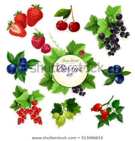 Vörös ribiszke étel természet gyümölcs háttér gyümölcsök Stock fotó © Rob_Stark