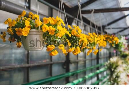 Flor amarela florescer cesta estoque foto flor Foto stock © nalinratphi
