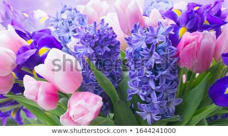 花束 ヒヤシンス 孤立した 黒 愛 ギフト ストックフォト © frescomovie