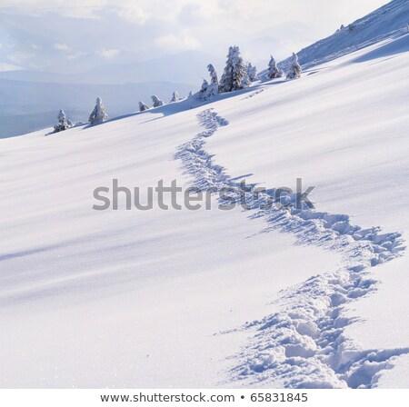 Inverno montagna sereno ventoso giorno Ucraina Foto d'archivio © BSANI