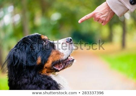Mujer formación perro sentarse comando obediencia Foto stock © Kzenon