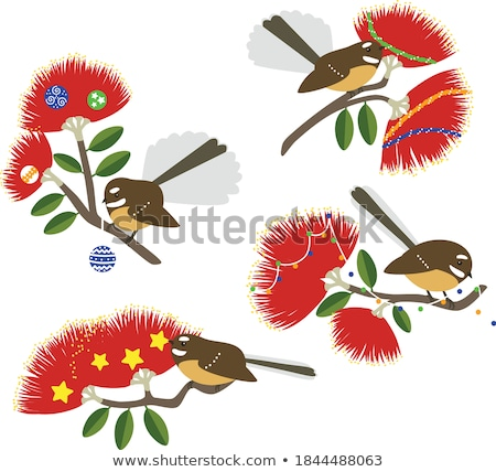 Pohutukawa Stock photo © Undy