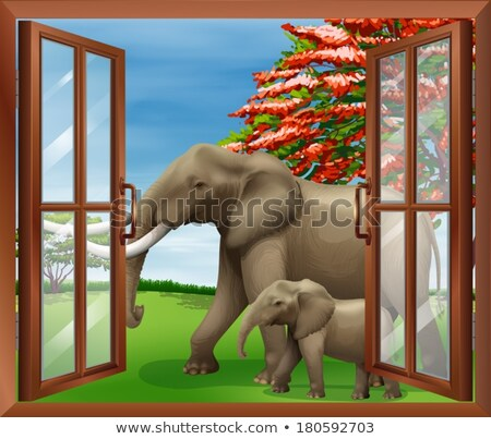 A window with a view of the big and small elephants Stock photo © bluering