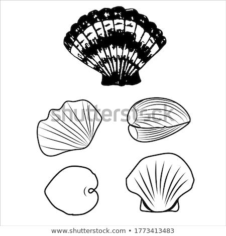 Osztriga minták szín monokróm tengeri hal ikonok Stock fotó © robuart