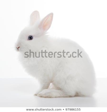 ウサギ 白 春 食品 背景 ストックフォト © zurijeta