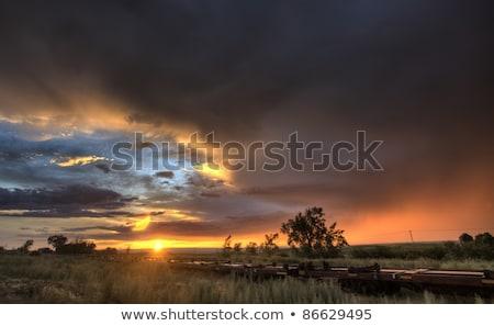 sunrise · prairie - photo stock © pictureguy