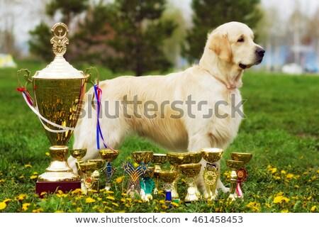 шоу · положение · красивой · собака · лет · трава - Сток-фото © goroshnikova