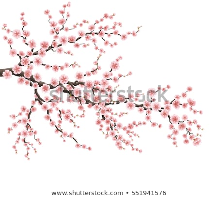 valósághű · sakura · Japán · cseresznye · ág · eps - stock fotó © beholdereye