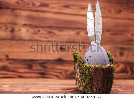 Bonitinho cinza ovo rabino orelhas musgo Foto stock © feedough