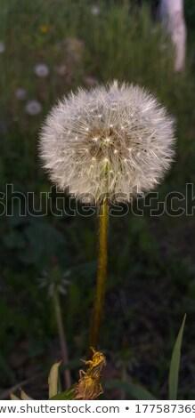 Légy mélységélesség űr szöveg tavasz nap Stock fotó © Kidza