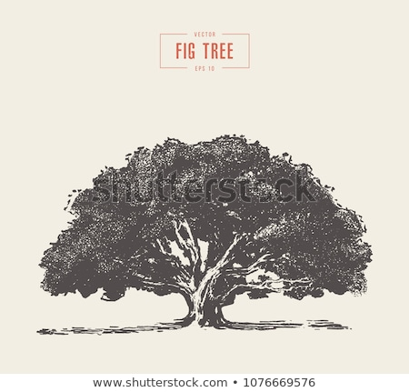 Zöld fa közelkép levelek növény Stock fotó © Digifoodstock