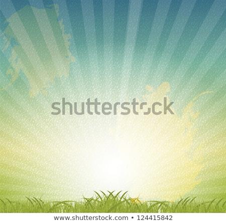 Verão prado grunge vetor grama verde transparente Foto stock © Sonya_illustrations