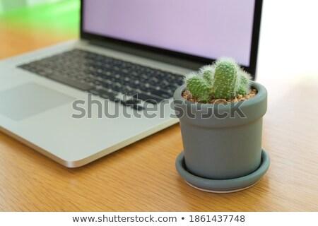 Javít hatásfok laptop modern munkahely közelkép Stock fotó © tashatuvango