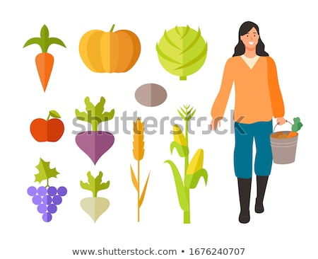 Woman holding basket of beetroot and radishes Stock photo © IS2