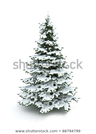 spruce branch on white background christmas tree branch to desi stock photo © popaukropa