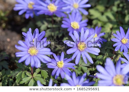 Kék fából készült felület virágok természet zöld Stock fotó © bdspn