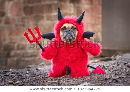 Sevimli köpekler şeytan halloween Stok fotoğraf © feedough