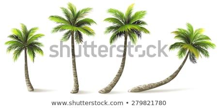 Kókuszpálma fa kilátás trópusi tengerpart tengerpart égbolt Stock fotó © boggy