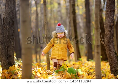 people strolling in autumn park with sunny weather stock photo © robuart