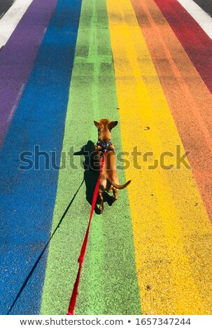 Dog and rainbow Stock photo © colematt