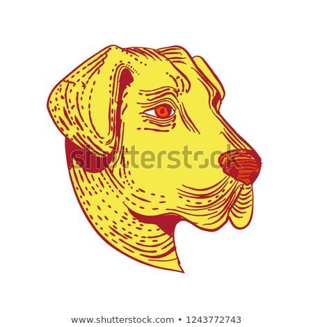 Anatolian Shepherd Dog Head Etching Color Stock photo © patrimonio