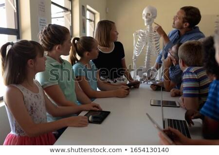 Oldalnézet férfi tanár magyaráz csontváz modell Stock fotó © wavebreak_media