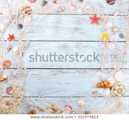 Deniz kabuk yaz hedef okyanus Stok fotoğraf © Anneleven