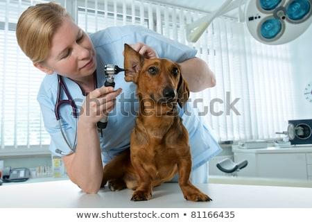 Női orvos megvizsgál kutya klinika mosolyog Stock fotó © Kzenon