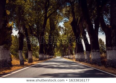 Avenue with old trees in rural Alentejo, Portugal Stock photo © Kzenon