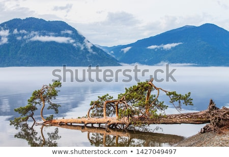 Foggy Teletskoye lake in Altai mountains Stock photo © olira