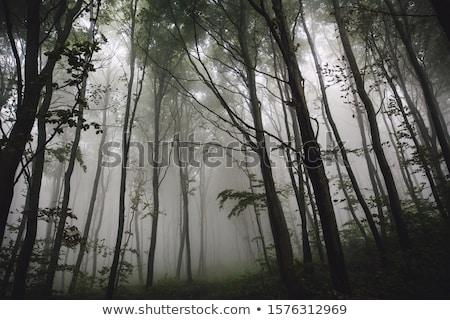Autunno misty mattina montagna Hill panorama Foto d'archivio © wildman